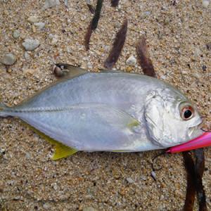 社員旅行だって釣りしちゃう!?沖縄の素晴らしい釣り。