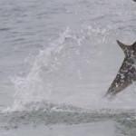 どれもこれもレジェンド級のデカさ!2015年大物釣りを3分にまとめた映像がハンパない