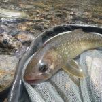 渓流・源流の釣り