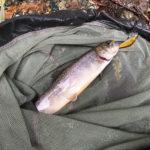 巨大ニジマスやハコスチがいる自然管釣り、赤久縄へ行ってきた!