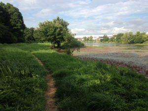 23区内で最大規模の面積をもつ水郷公園