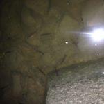 【荒川】夜の荒川で川遊び。うなぎが釣れんなら小物と遊ぶ(笹目橋)
