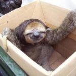 【実食】ナマケモノは餌を食べるのか?危険物マテガイ&ホンビノスを食らう!