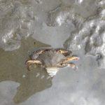 【潮干狩勉】江戸川で取れた生物は結局何だったのか?