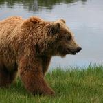 【釣事件簿】秋山の恐怖。釣り中にクマ(羆)にやられた事件。