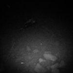 【荒川シーバス2017】焼死体発見してしまった!?トップ縛りのドM釣行