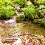 【渓流釣り】9月中旬に禁漁期間に突入する全国河川まとめ。