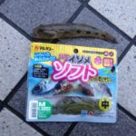 【ハゼ釣り】使える餌、ルアーまとめ。鉄板〜変わり種のエサまでご紹介♪