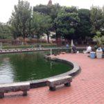 【釣り堀】浅草寺、スカイツリー・・・の間にヘラブナで♪隅田公園魚釣り場をご紹介♪