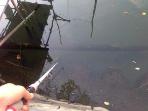 ザリガニを使ったハゼ釣り1投目