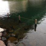 【釣り場】旧中川を歩く!中川大橋から逆井橋の釣り場紹介♪