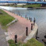 【釣り場】旧中川右岸散策(中川新橋〜ふれあい小橋)。希少スポットアリ!