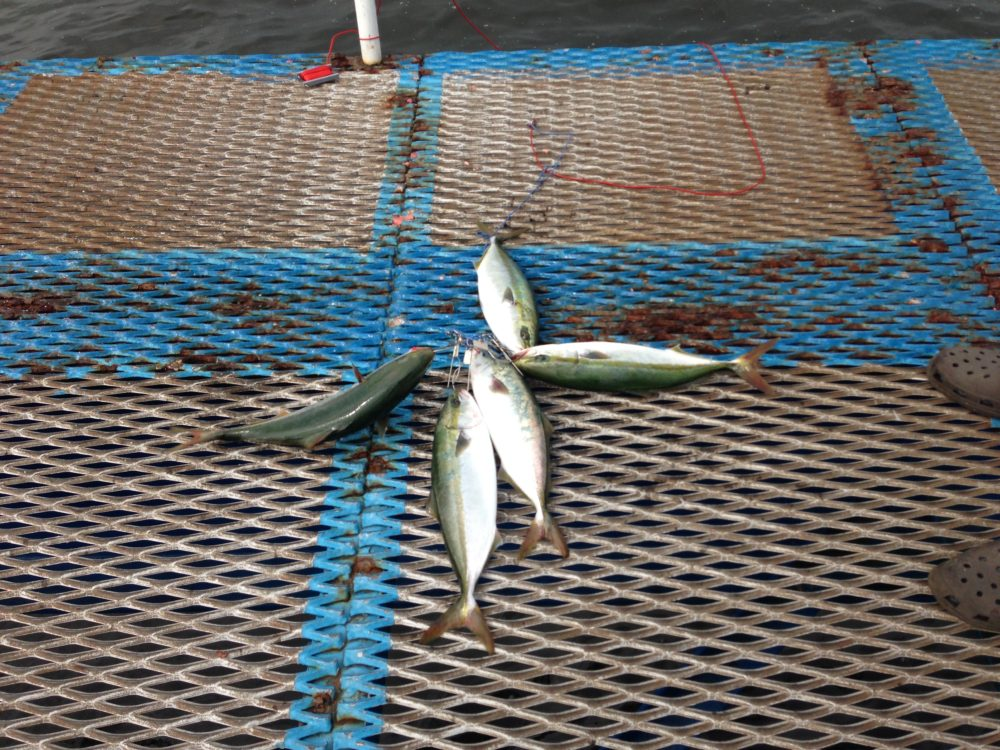 釣り 公園 釣果 市原 海