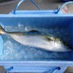 9月22日〜10月20日の関東海釣り施設、イナダ釣果まとめ!市原フィーバー継続中。