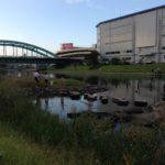 【釣り場】旧中川(総武線〜江東新橋)。ファミリーにオススメ!中洲をピョンピョン飛び回ろう♪
