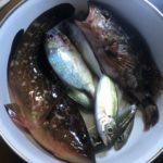寒い時は車内でズボ釣り!小鯛追加で十六島釣行は五目達成で完 ♪