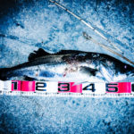 【荒川シーバス2018】ダラダラ流れの波紋の正体は!?釣り人の悪い癖発症・・・