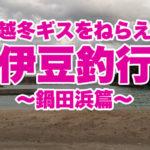 【伊豆の釣り】越冬ギスをねらえ!鍋田浜海岸で冬の釣行♪