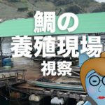 【愛媛県宇和島市】鯛の養殖現場を視察。岩場にあるあの子もパクリ♪