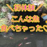 【まちおかの初体験in九州!】この魚って生で食べられるんですね!?
