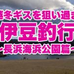 【伊豆の釣り】え?また越冬ギス狙うの?東伊豆上多賀「長浜海浜公園」で冬の投げ釣り♪