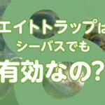 【みんなの疑問にお答えします】エイトトラップはシーバスも釣れちゃうの?気になるよその答え!