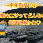 【愛媛県宇和島市⑤】鯛の養殖、独自のエサってどんな風に作ってるの?とっても気になっちゃう♪