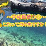 【愛媛県宇和島市⑥】釣ったお魚届いたよ!でも、このお魚って何の魚ですか??