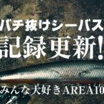 【荒川シーバス2019】AREA10でついに記録更新!ウェーディングベストを新調したよ♪