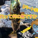 【釣ったお魚シリーズ】これって何の魚ですか??パート⑤ハゼとアナハゼって何が違うの?ハゼはハゼでもハゼじゃない??