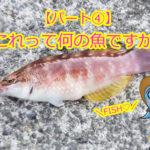 これって何の魚ですか??パート④ アカササノハベラとホシササノハベラの違いって??