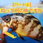【釣ったお魚シリーズ】これって何の魚ですか??パート⑥メバルはカサゴ目!シロもアカもクロも!カサゴとムラソイがまたわからない!