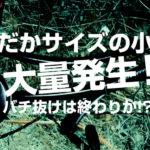 【荒川シーバス2019】いよいよマクロベイトが現れた!どうなるバチ抜け!どうする俺!