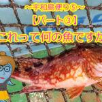 【愛媛県宇和島市⑧】宇和島便り~釣ったお魚届いたよ!これって何の魚ですか??パート③