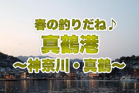 【神奈川の釣り】春の真鶴に行ってきた!あったかくなったけど釣れるかな?アイツだけは釣れたよ♪ ~真鶴港~