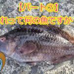 【釣ったお魚シリーズ】これって何の魚ですか??パート⑦分からない!ツリーバの誰も何の魚かわからない!!!!