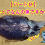 【愛媛県宇和島市】釣ったお魚届いたよ!これって何の魚ですか??パート⑩このイカなんてイカですか??編集長がお休みで何のイカかわからへん!!