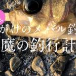 【富津のメバル2019】命がけの釣行計画!小潮のド干潮潮止まりでいっぱい釣れたよ♪