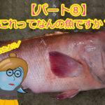 """【愛媛県宇和島市】釣ったお魚届いたよ!これって何の魚ですか??パート⑧「ブダイ」と「コブダイ」の違いって??コブがあるから""""コブダイ""""なの??"""