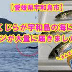 【愛媛県宇和島市】まちおか驚き!!なんと!クジラが宇和島の海に!!!!そして、80匹のアジが届いたよ♪