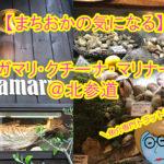 【まちおかの気になる】ボガマリ・クチーナ・マリナーラ@北参道。ショーケースに並んだお魚がお店のその日のメニューだなんて、気になる気になる♪