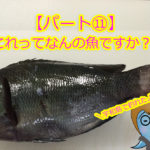【愛媛県宇和島】釣ったお魚届いたよ。これって何の魚ですか??パート⑪メジナ?グレ?尾長グレ?口太グレ?なんのこっちゃわからへん!!