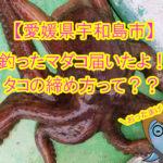 【愛媛県宇和島市】イカよりもタコの締め方動画が豪快すぎて、まちおかおったまげ!!お父さんのマダコめっちゃおっきいよ。