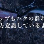 【荒川シーバス2019】マイクロベイトパターンとトップシーズンが同時にやってきた!謎のホーム!謎の漂流物!