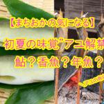 【まちおかの気になる】初夏の味覚アユ解禁!アユの寿命は一年…!鮎?香魚?年魚?全部アユ!!