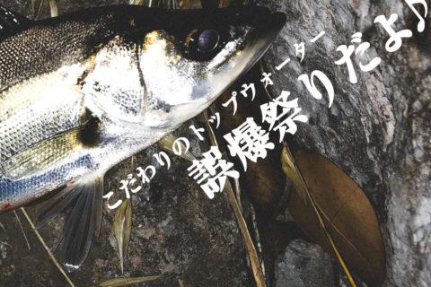 【荒川シーバス2019】ほぼ自作トップ縛りのドM釣行!誤爆祭りだよ♪