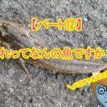 【釣ったお魚シリーズ】これって何の魚ですか?パート⑫メゴチ?マゴチ?ネズミゴチ?メゴチだけどメゴチじゃない?!
