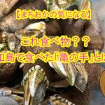 【愛媛県宇和島市】この子は食べ物??「亀の手」だけど「亀の手」じゃない!?