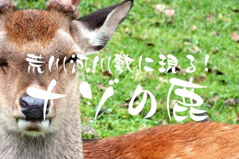 【動物注意!】都内の荒川河川敷に荒ぶる鹿が現る!