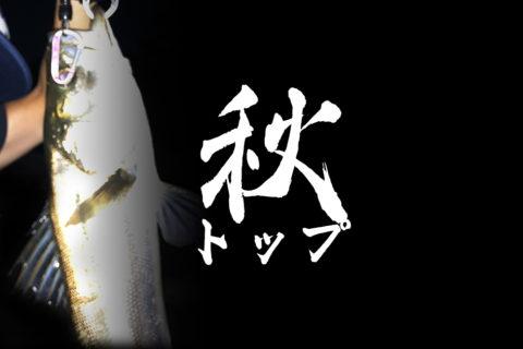 【荒川シーバス2020】いよいよ秋のトップシーズンに突入!自作トッププラグ縛りのドM釣行!秋爆ではないけどね!